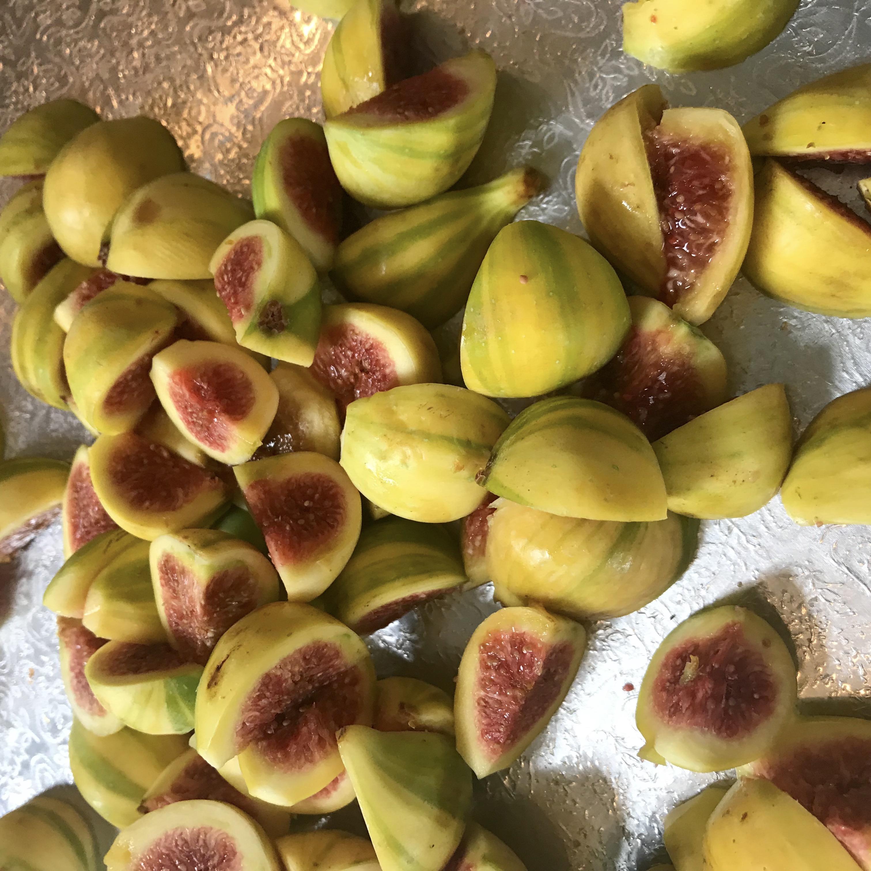 panache-tiger-fig-one-green-world-nursery-portland-oregon